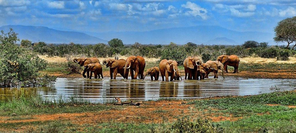 Elefanten stillen Ihren großen Durst an der Wasserstelle.