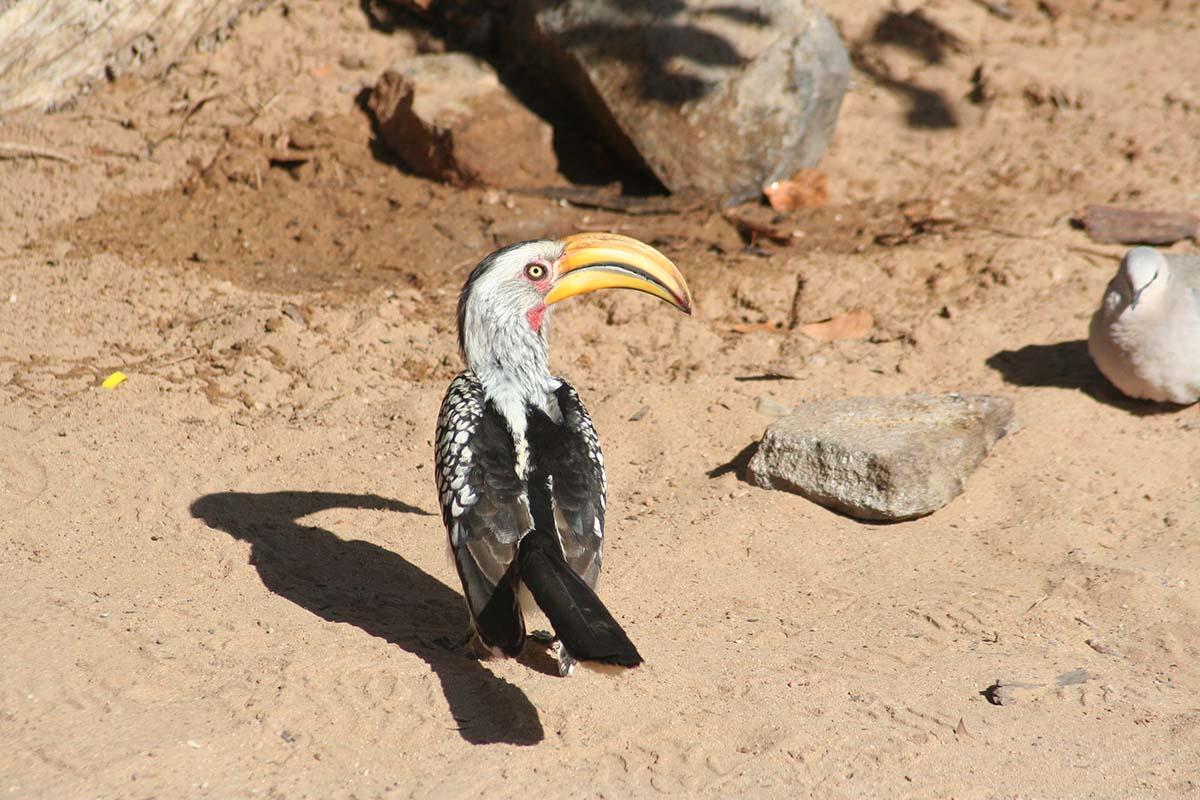 Schöne Vogelwelten erleben Sie in Namibia.