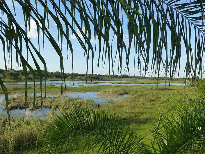Wasserreiches Delta.