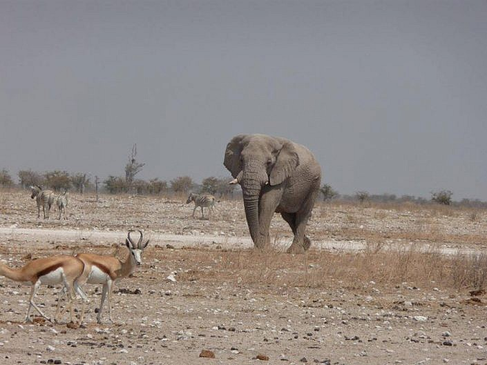 Elefanten in Etosch NP Namibia