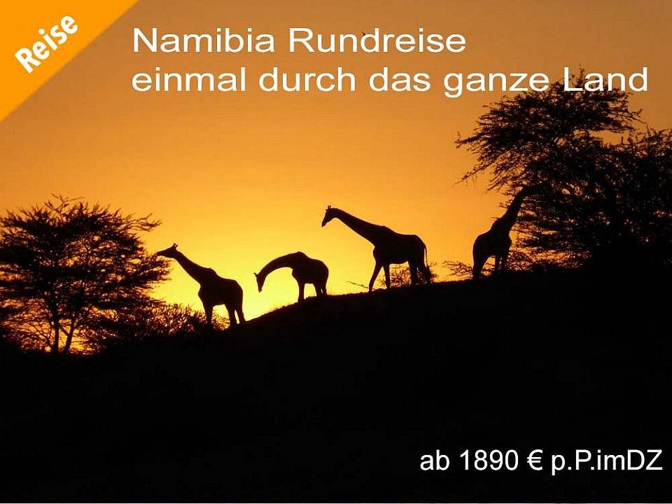 Namibia Rundreise Giraffen am Watrerberg