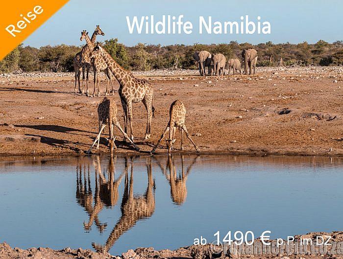 Wildlife-Namibia
